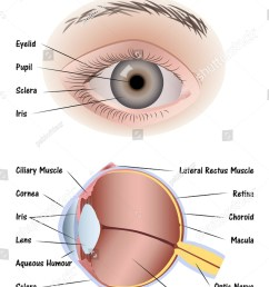 eye diagram for [ 1001 x 1600 Pixel ]