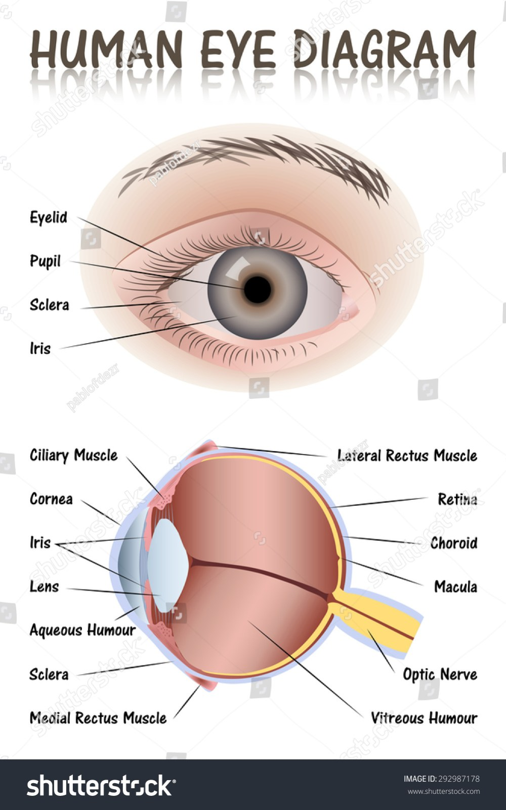 medium resolution of eye diagram for