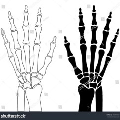 Wrist And Hand Unlabeled Diagram Yamaha Warrior 350 Wiring Skeleton Of Human Carpal Bones Metacarpals Phalanges Graphic Design Element For Placard Anatomical Or Medical Book Detailed Flat Vector Icon