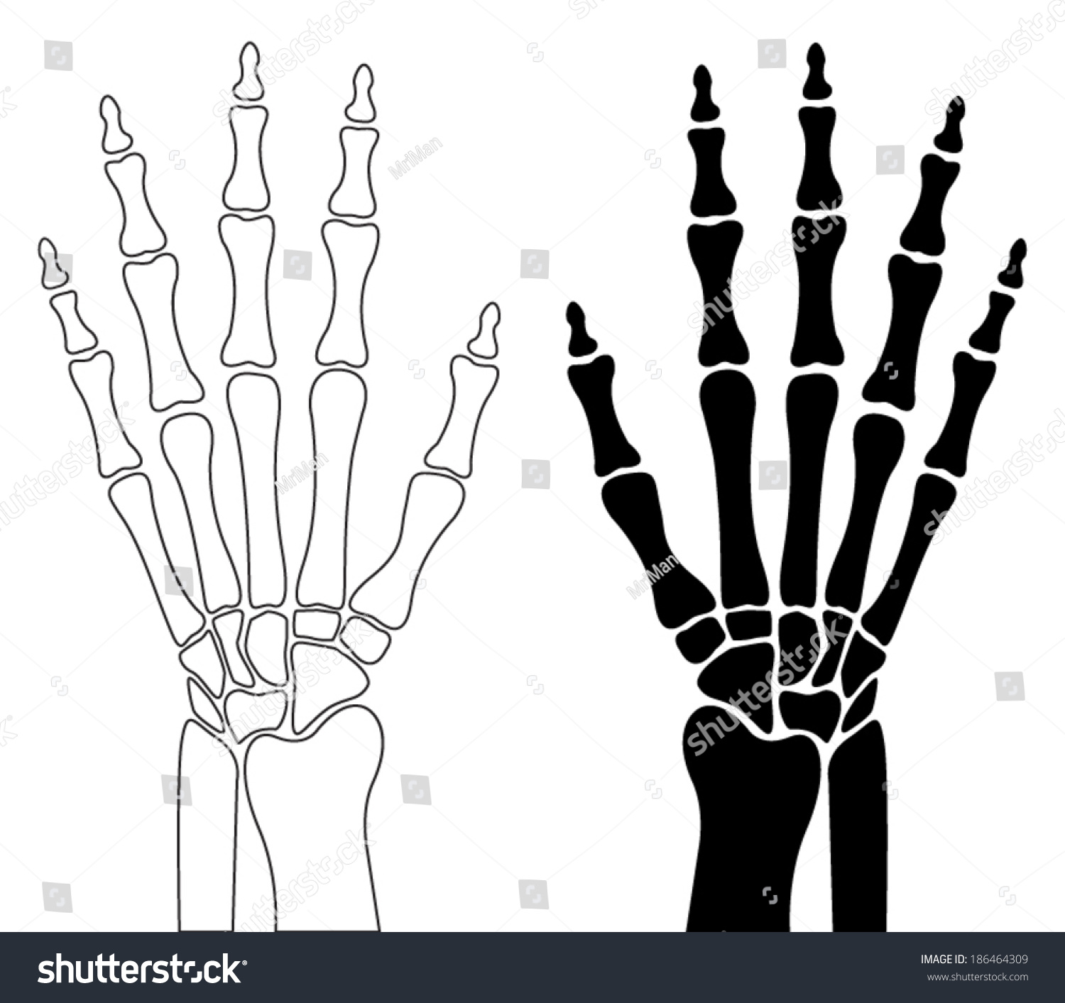 wrist and hand unlabeled diagram wiring for century electric motor skeleton of human carpal bones metacarpals phalanges graphic design element placard anatomical or medical book detailed flat vector icon