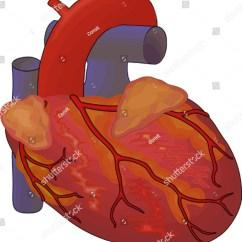 Heart Diagram Outside Haltech Interceptor Wiring Human Stock Vector Illustration 46150381