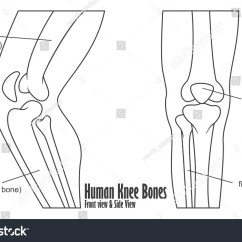 Knee Diagrams Anatomy Of A Electric Motor Manufacturer Volkswagen E Golf Human Bones Front Side View Stock Vector 412015252