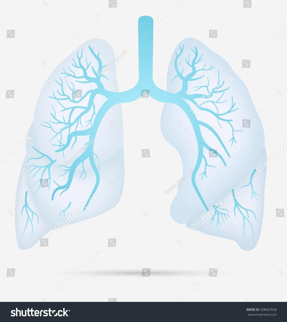 medium resolution of tb pneumonia diagram best wiring diagram tb pneumonia diagram