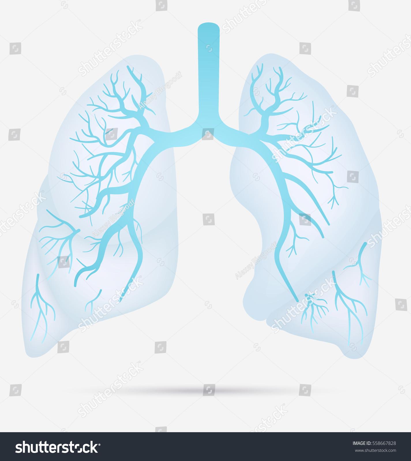 hight resolution of tb pneumonia diagram best wiring diagram tb pneumonia diagram