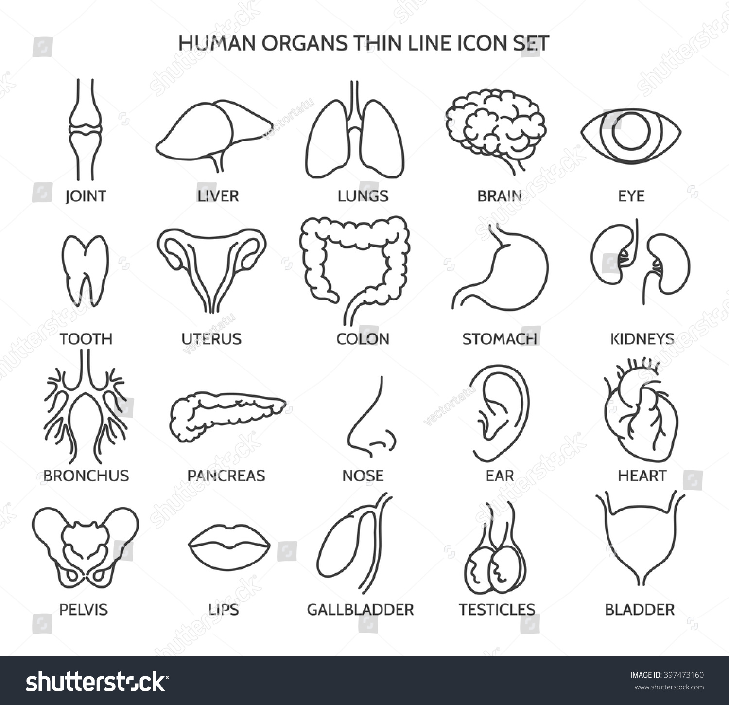 Human Organ Signs Or Body Parts Symbols Tooth And Brain