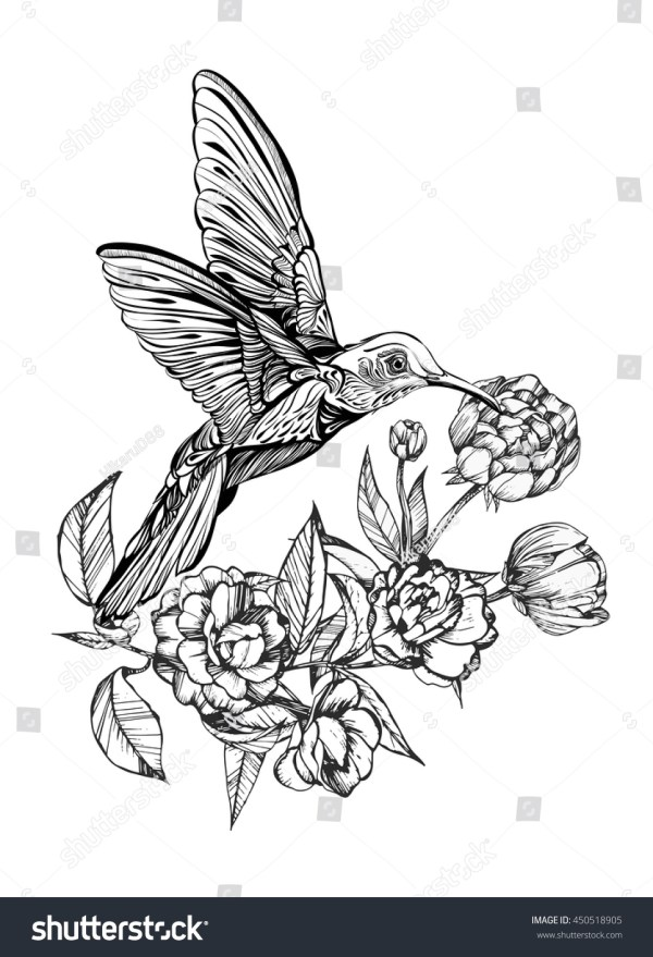 hummingbird flightdetailed drawing