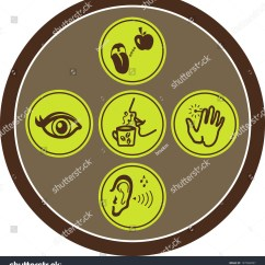 Five Senses Diagram Recessed Lighting Parts Icon Set Of Human Stock Vector
