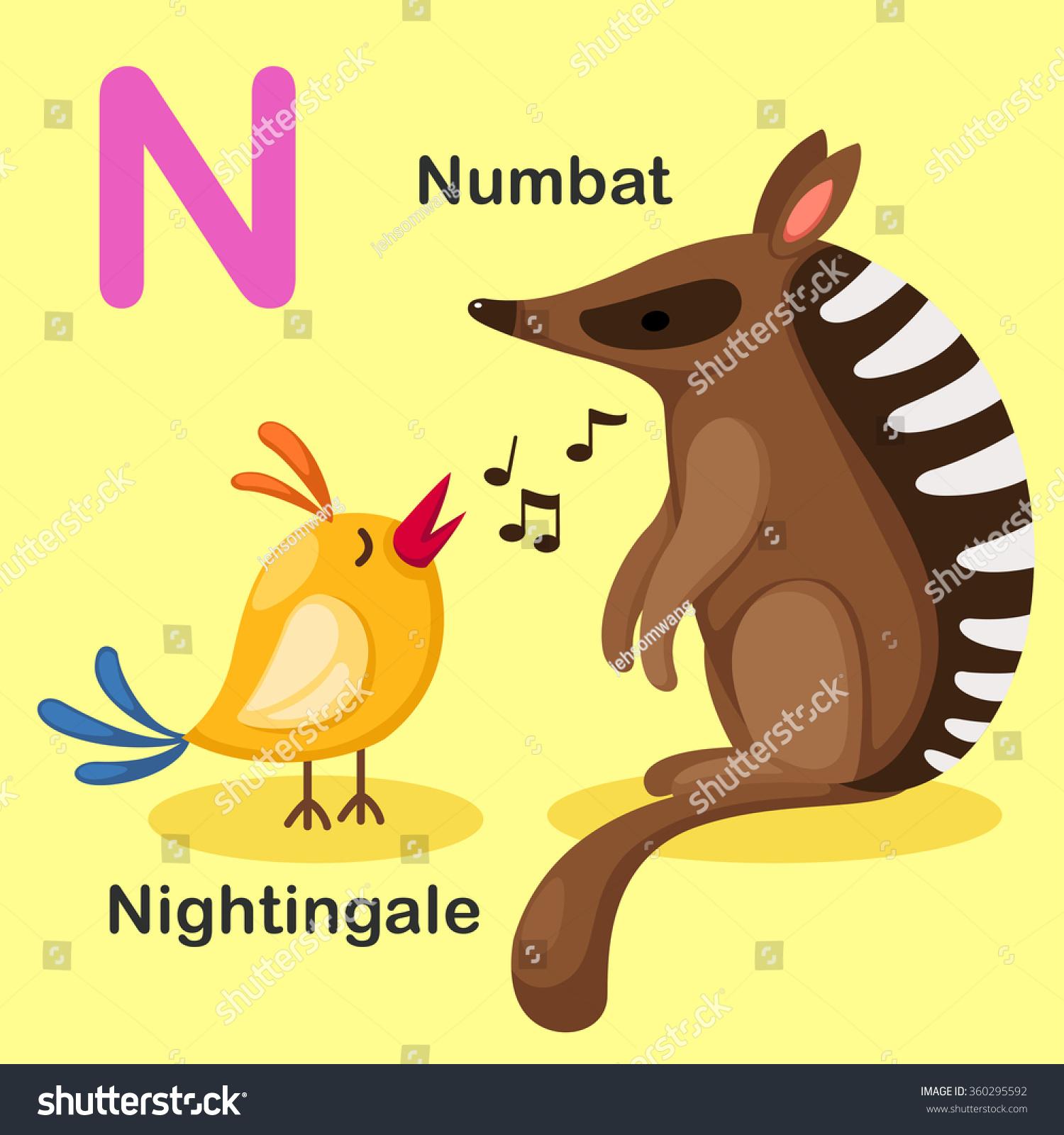 Illustration Isolated Animal Alphabet Letter Nnumbatnightingalevector Stock Vector