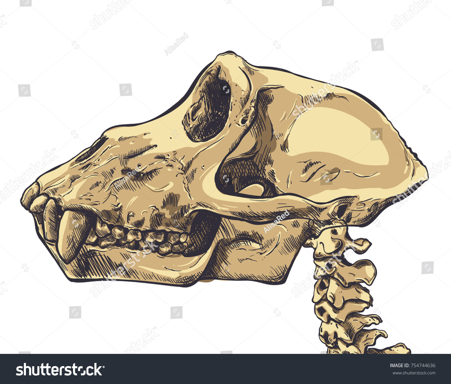 hight resolution of illustration of a monkey skull on background vector