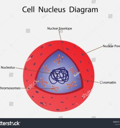 illustration of biology cell nucleus diagram [ 1500 x 1297 Pixel ]