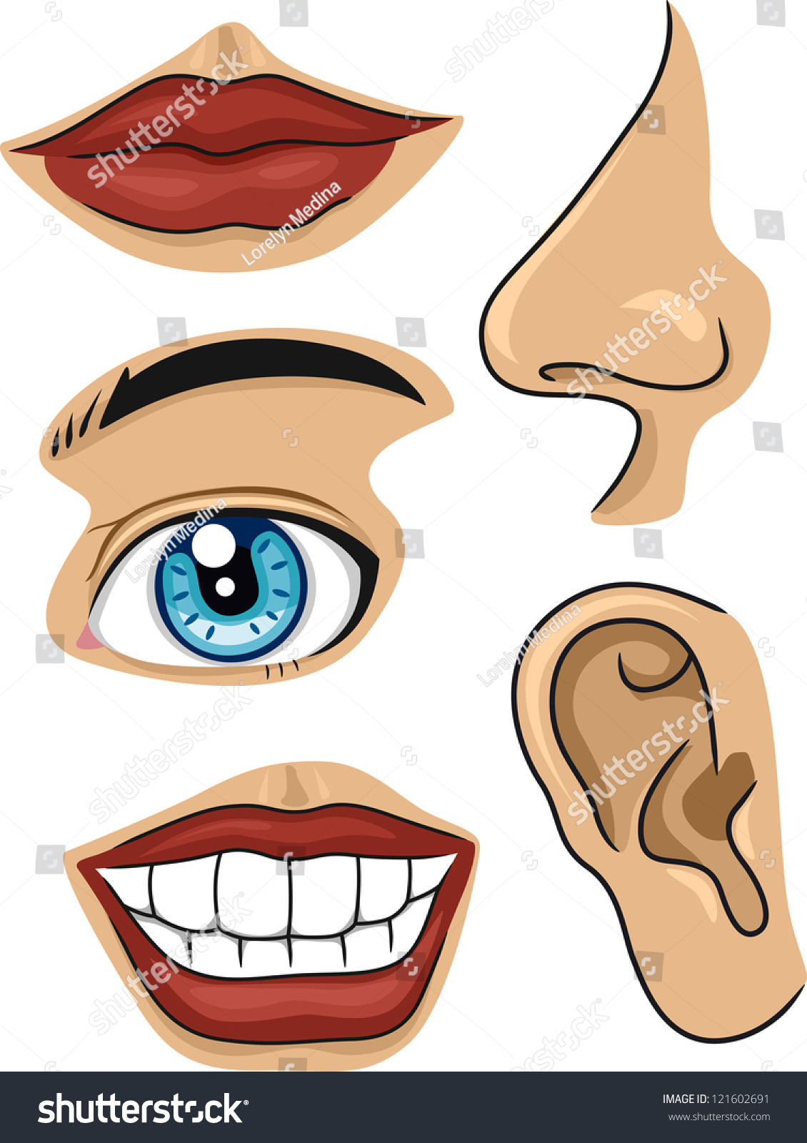 Illustration Of Different Parts Of The Face