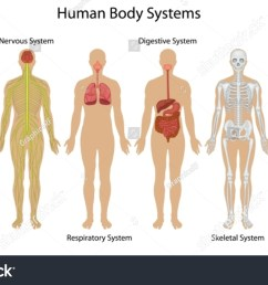 illustration of the human body systems [ 1500 x 963 Pixel ]