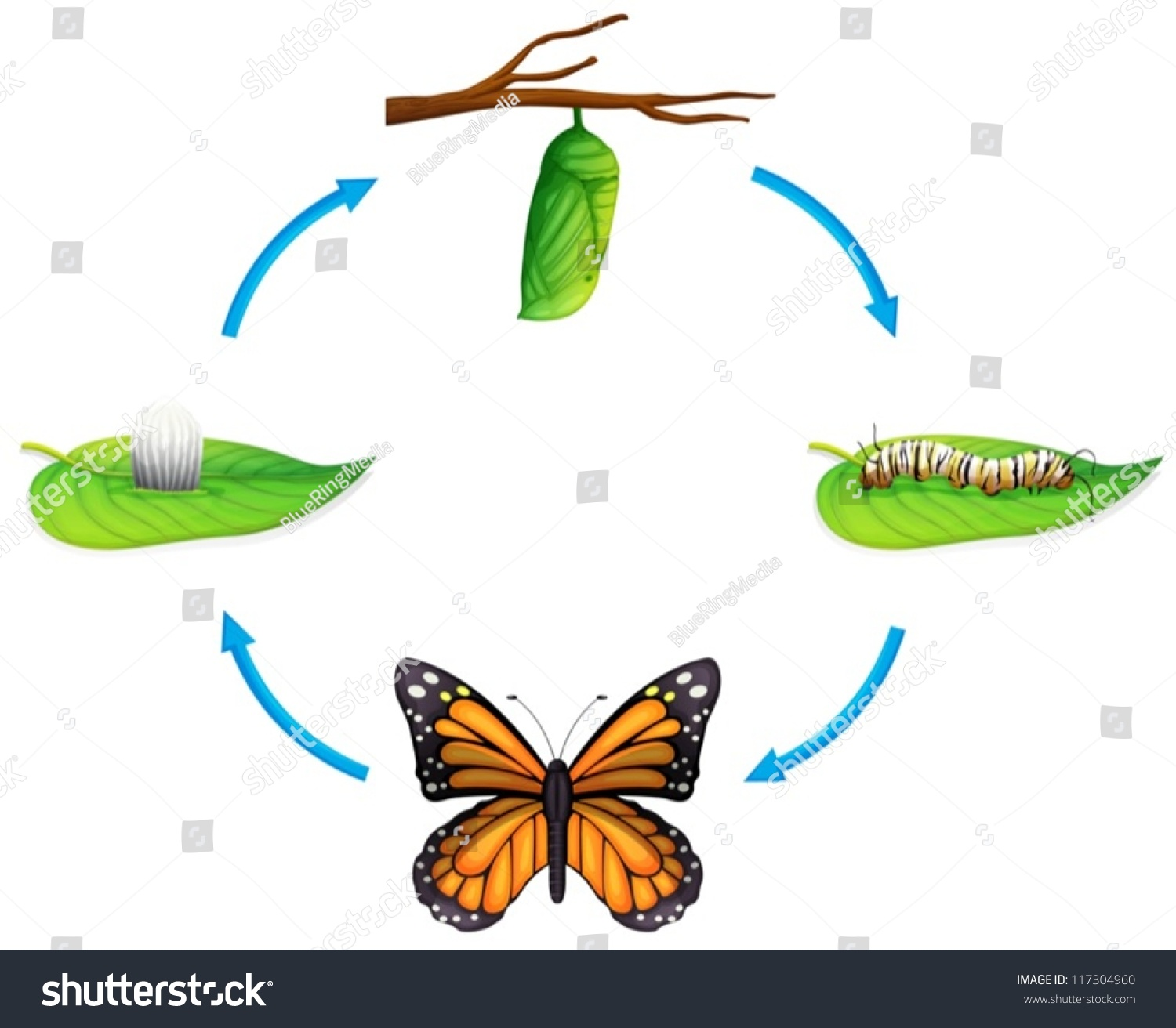 Illustration Of The Life Cycle Of A Danaus Plexippus On A