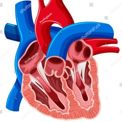 Heart Diagram Inside 93 Honda Civic Fuse Of Human Illustration 441954022