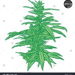 Plant Diagram Clip Art 2007 Dodge Caliber Belt Routing Marijuana  Cliparts