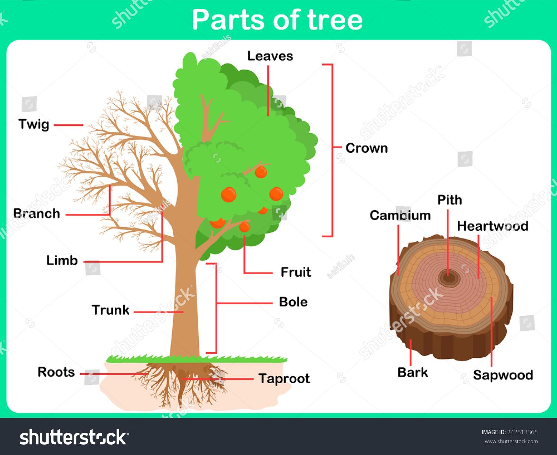 5th Grade Longleaf Curriculum Coastal Land Trust Environmental Education Curriculum