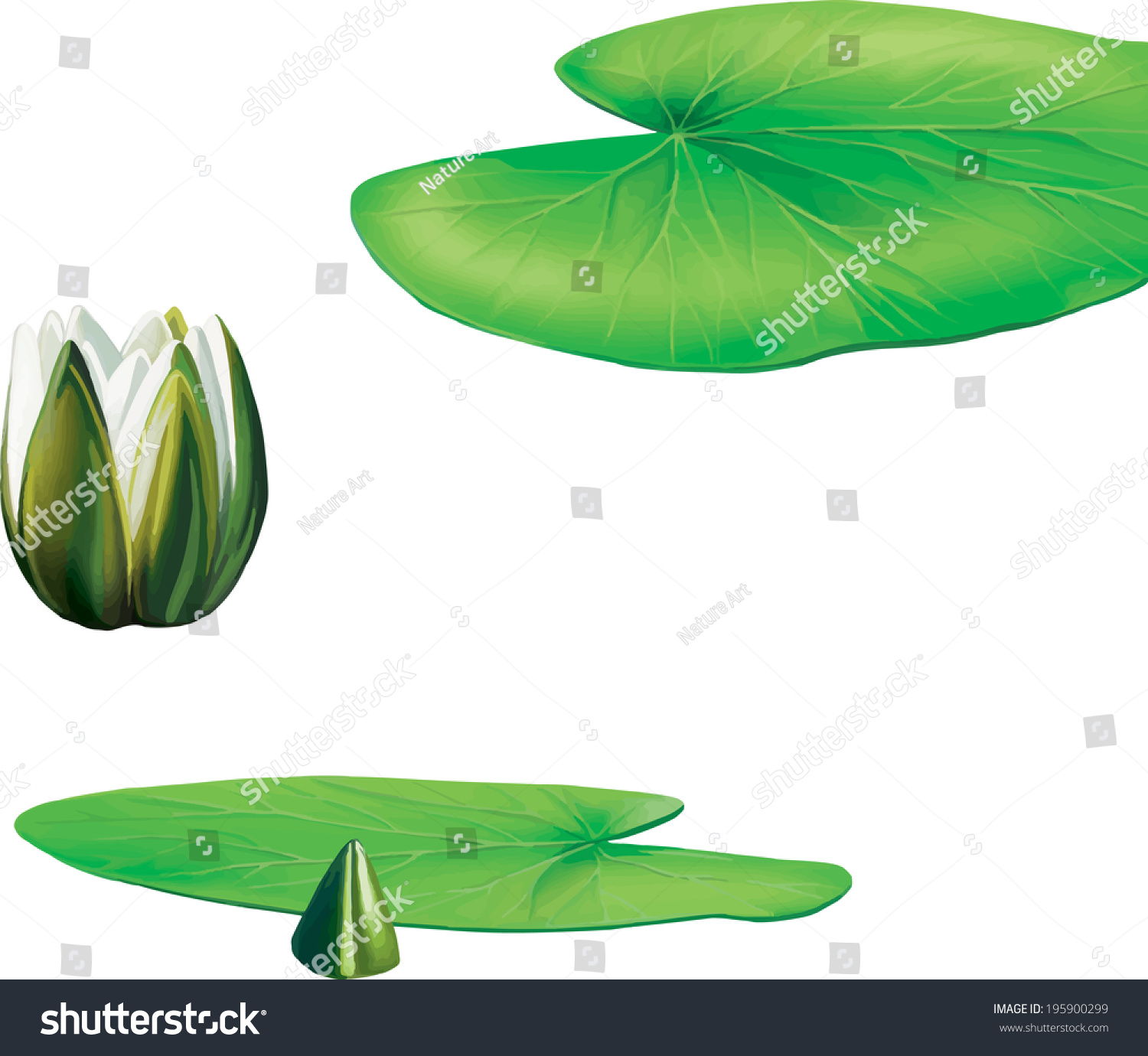 lotus in water plant diagram bohr rutherford of helium leaves lily flower stock vector