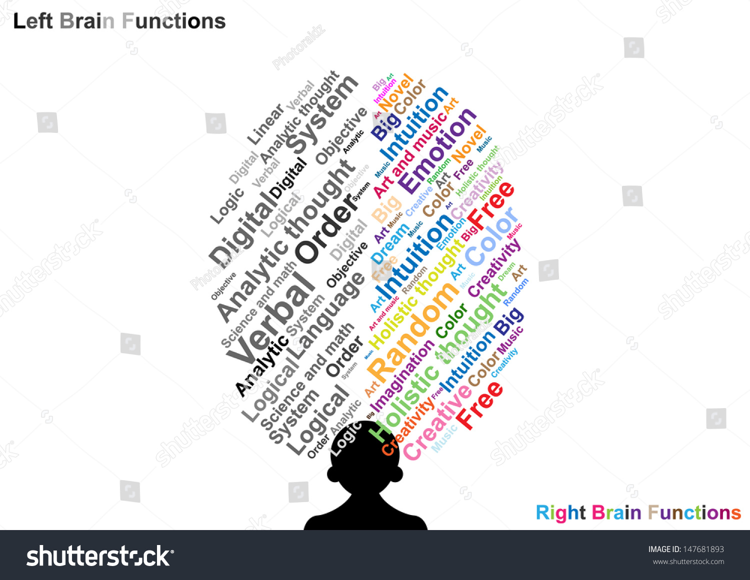 left side brain functions diagram saturn sl2 stereo wiring right function illustration stock vector