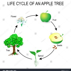 Life Cycle Of Moss Plant Diagram Liquid Level Controller Circuit Apple Tree Flower Seeds Stock Vector 612425279