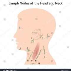 Diagram Lymph Nodes On Back Of Head Plc Wiring Diagrams Tutorials Neck Stock Vector 100624822 Shutterstock