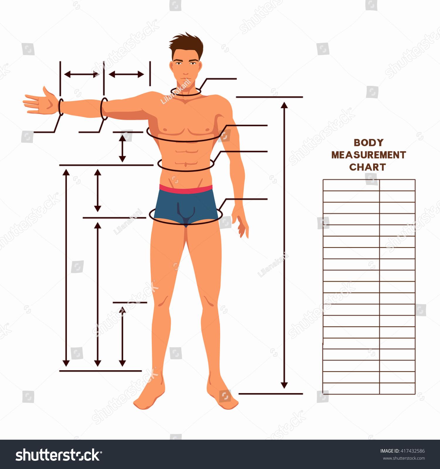 Male Body Measurement Chart Scheme Measurement Stock