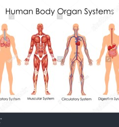 medical education chart of biology for human body organ system diagram vector illustration [ 1500 x 880 Pixel ]
