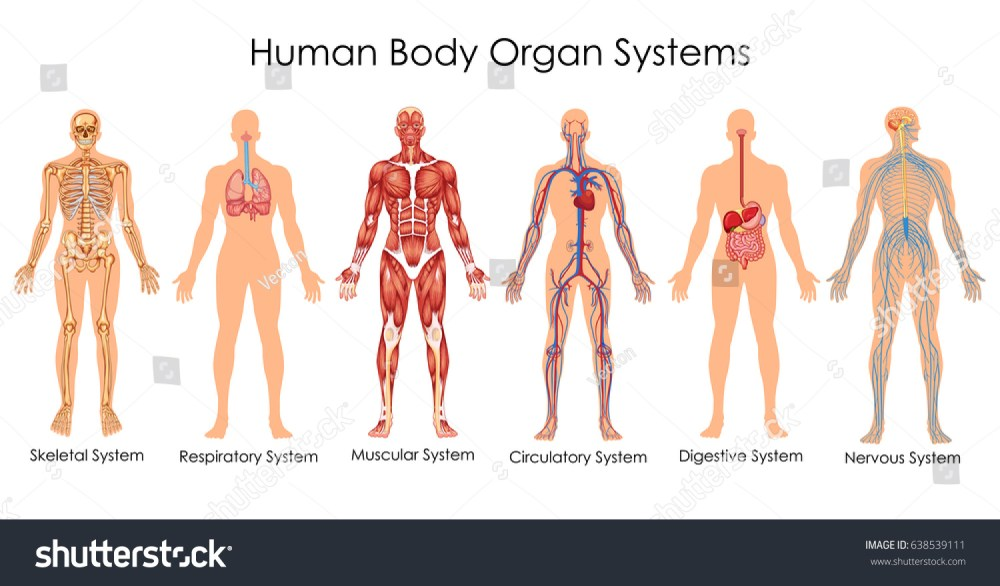 medium resolution of medical education chart of biology for human body organ system diagram vector illustration