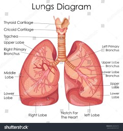 medical education chart of biology for lungs diagram vector illustration [ 1500 x 1600 Pixel ]