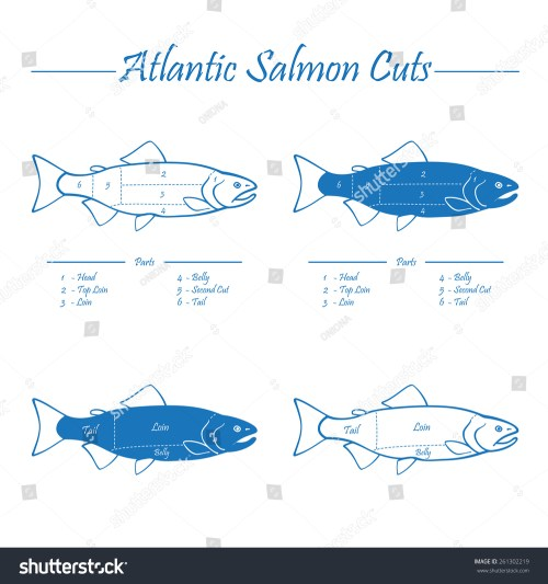 small resolution of norwegian atlantic salmon cutting diagram illustration blue on white