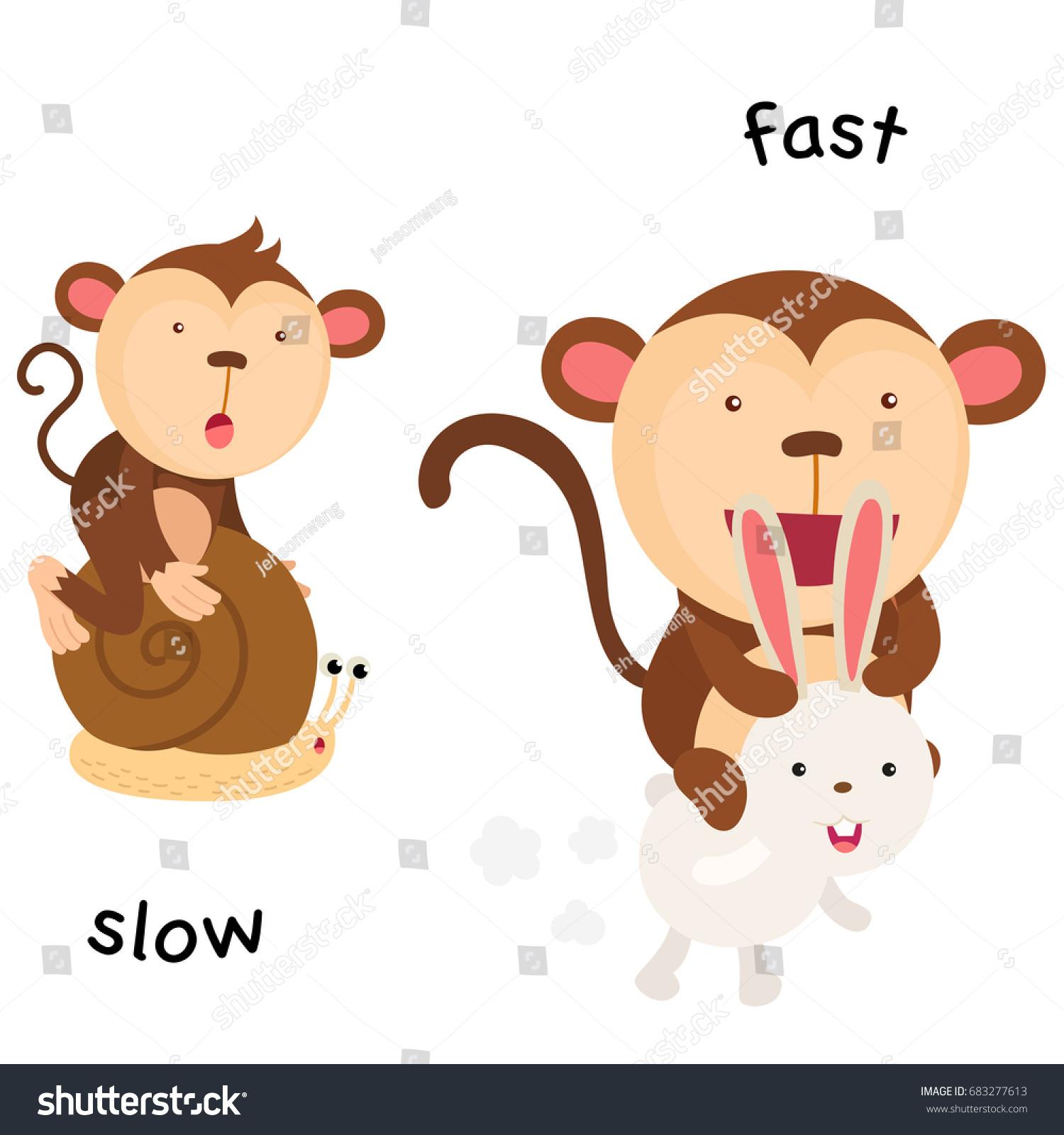 Opposite Slow Fast Vector Illustration Stock Vector