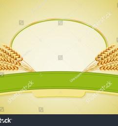 wheat flour or pasta macaroni spaghetti vector illustration of ears  [ 1500 x 1075 Pixel ]