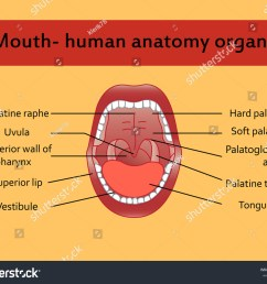 parts of human mouth open mouth and white healthy teeth vector diagram with  [ 1500 x 1225 Pixel ]
