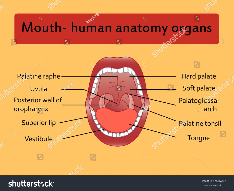 health tongue diagram gm wiring diagrams parts of human mouth mom has tits