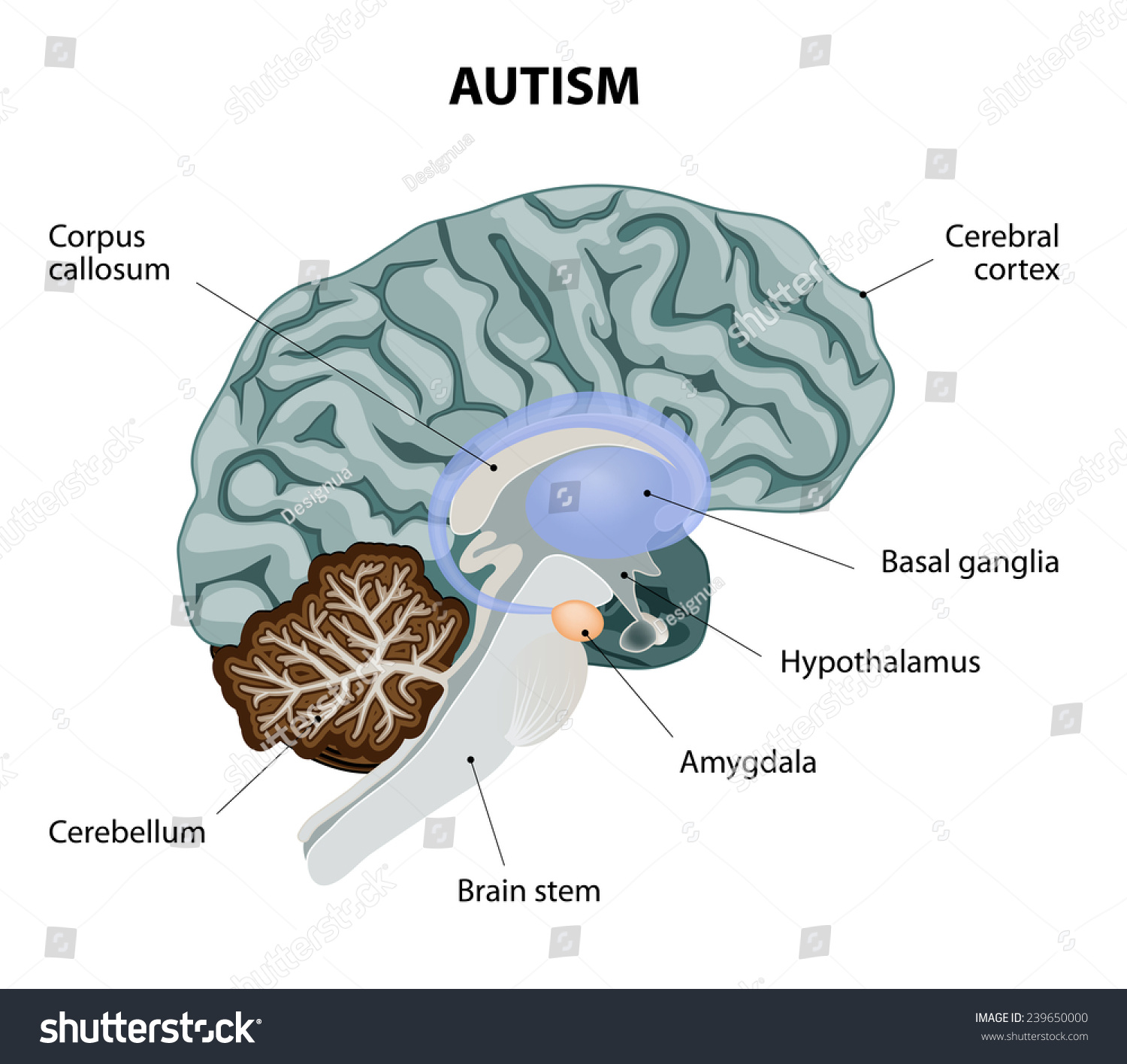 brain diagram inferior ceiling fan wall switch wiring parts affected by autism vector stock