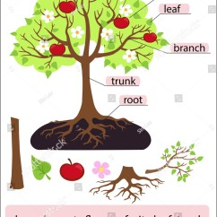 Branches Branching Tree Diagram 4 Wire Relay Wiring Parts Treeclipart Structure Trunk Root Stock Vector