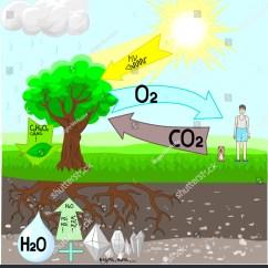 Photosynthesis Z Scheme Diagram E46 Light Control Module Wiring Stock Vector 541813255 Shutterstock