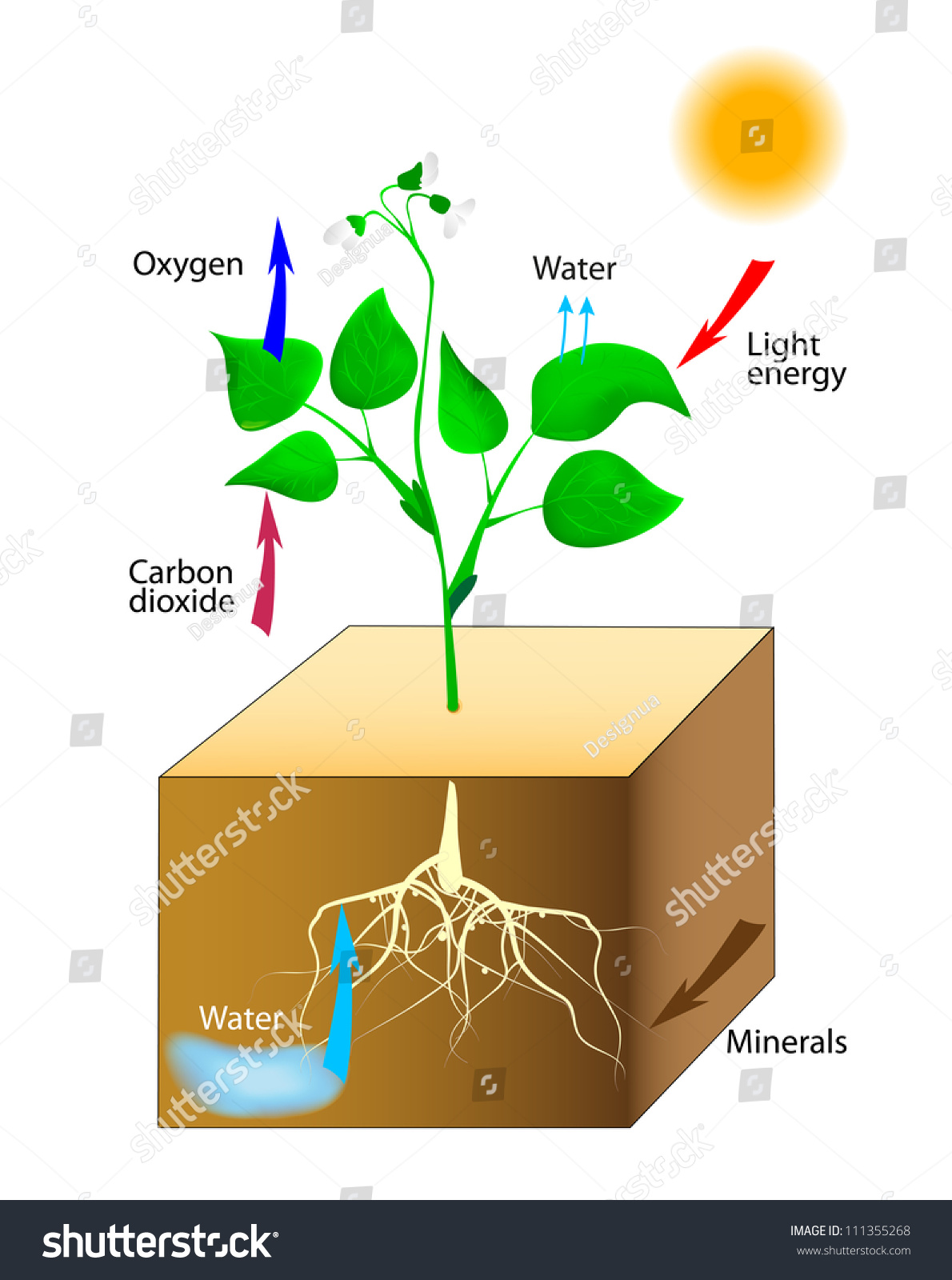 draw a diagram of photosynthesis hornby dcc wiring vector schematic plants