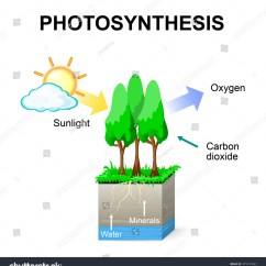 Photosynthesis Z Scheme Diagram College Database Template Vector Schematic Plants