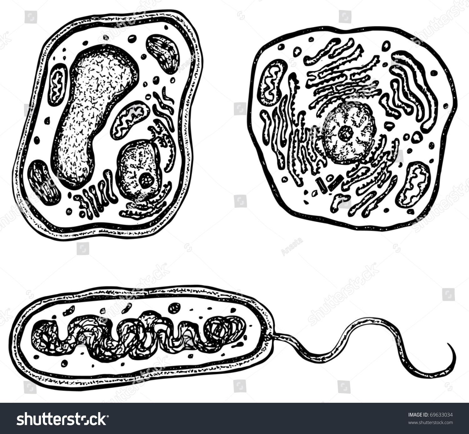 plant cell diagram black and white iphone 4 charger wire animal bacteria cells organelles each stock vector
