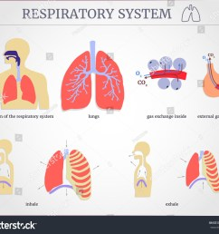 respiratory system diagram of the respiratory system with lungs inside gas exchange external [ 1500 x 1287 Pixel ]