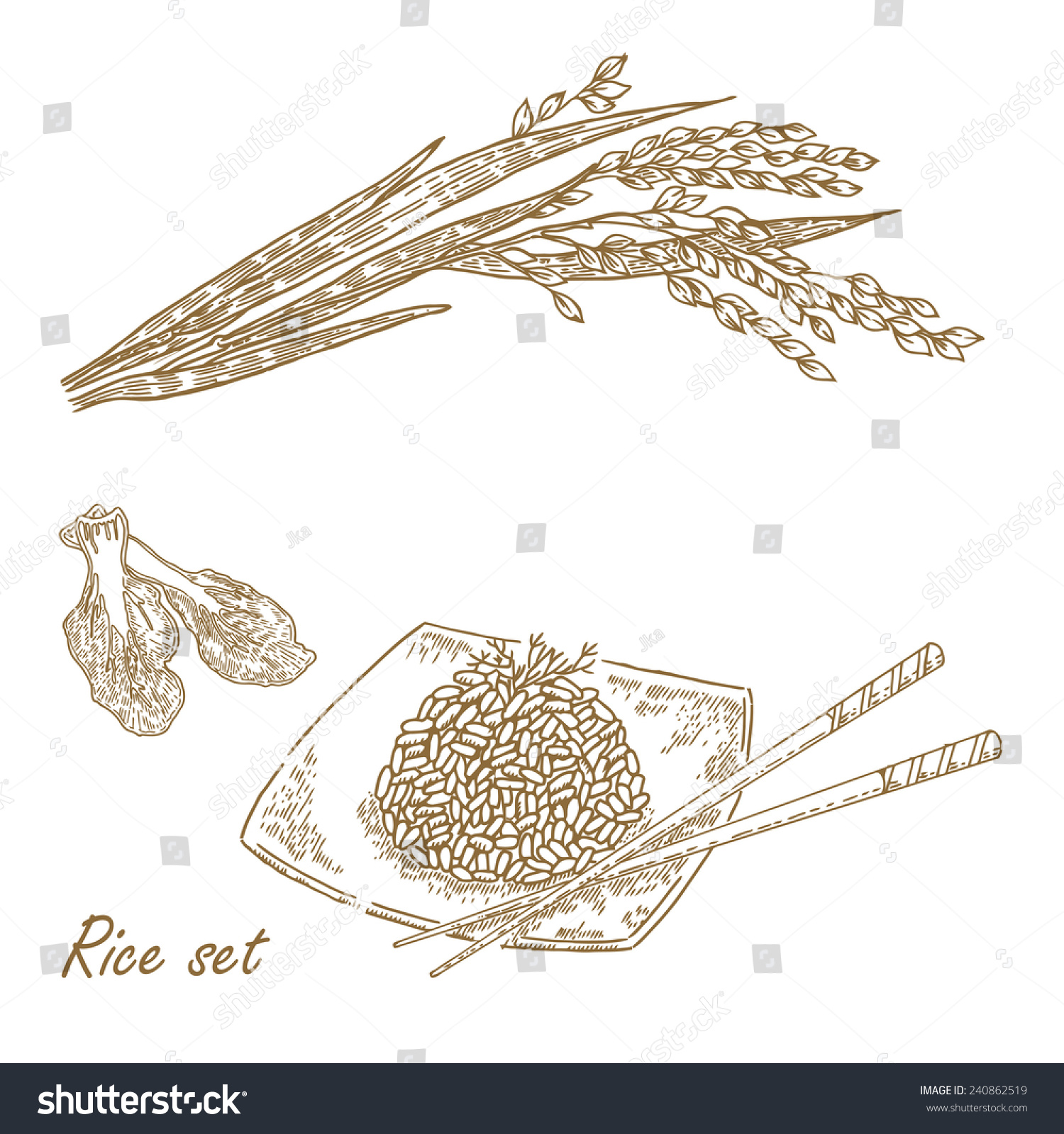 hight resolution of hand drawn vector illustration rice plant rice porridge in sketch style