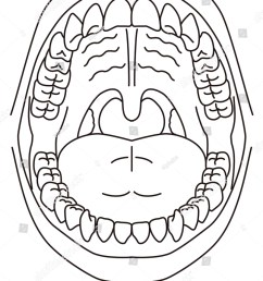 schematic diagram of the oral cavity [ 1202 x 1600 Pixel ]