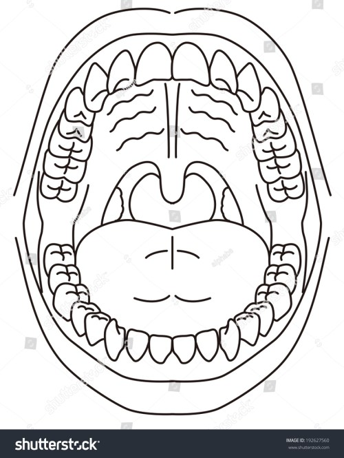 small resolution of schematic diagram of the oral cavity