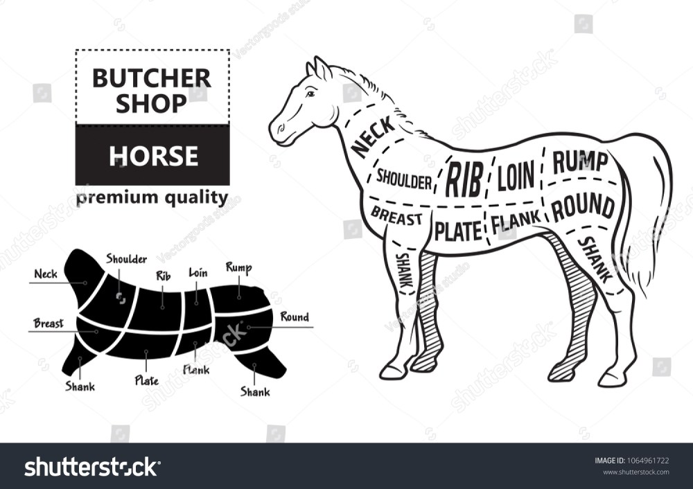 medium resolution of scheme of cutting horse meat with cutting lines design for butcher shop banner