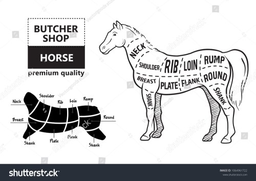small resolution of scheme of cutting horse meat with cutting lines design for butcher shop banner