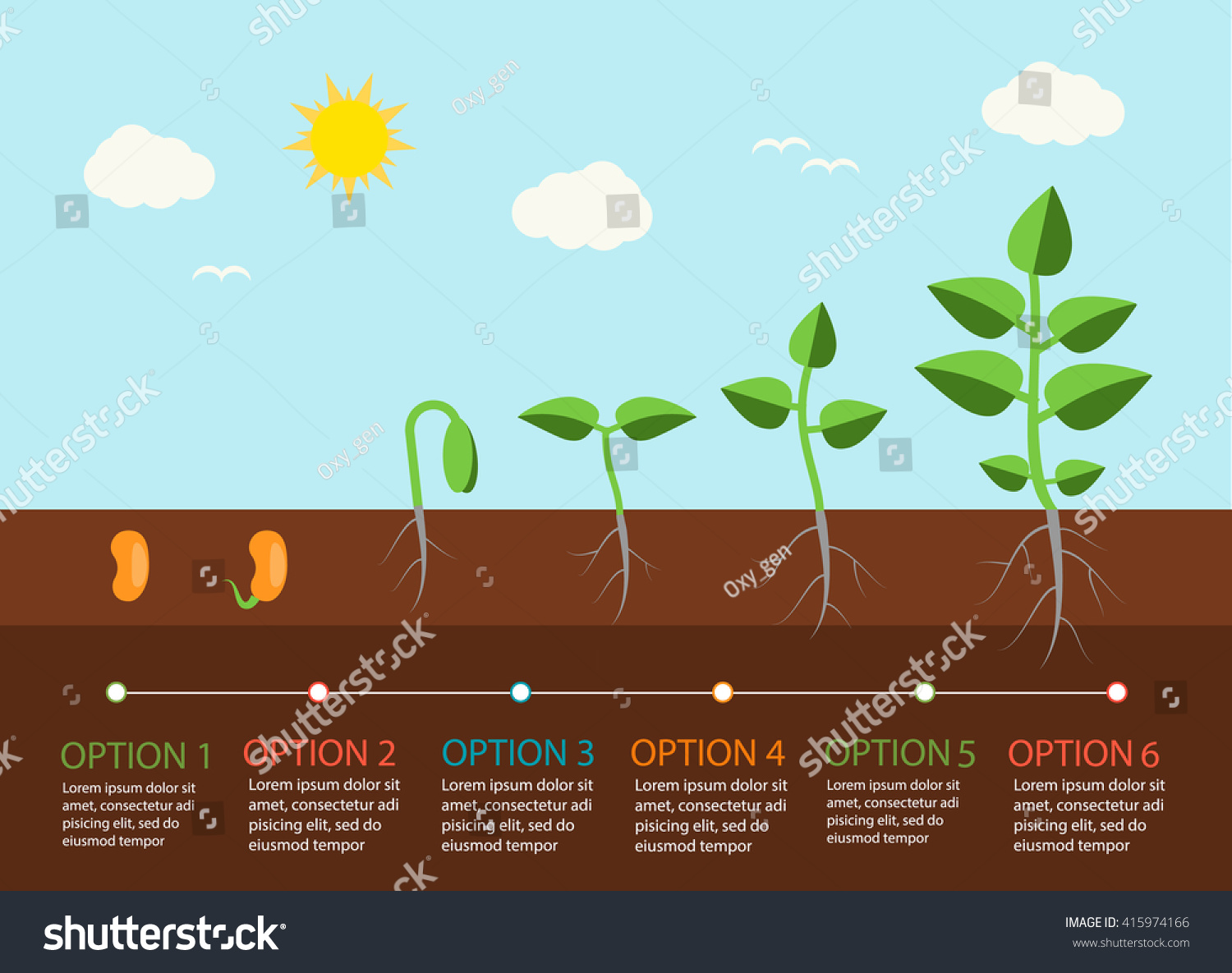 sunflower plant life cycle diagram 1990 jeep wrangler stereo wiring seedlings growing infographics plants grow stages stock