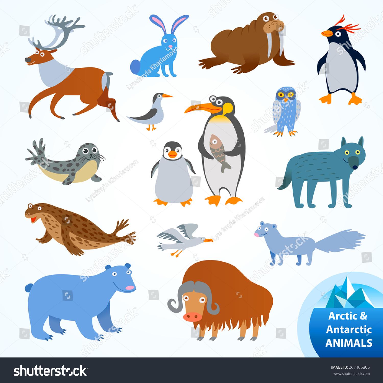 Set Funny Arctic Antarctic Animals Penguin Stock Vector