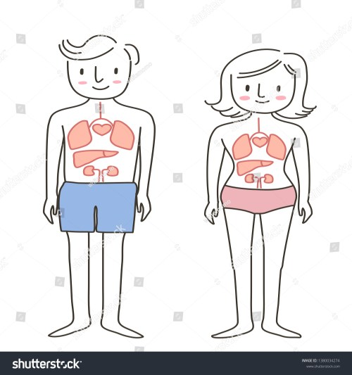small resolution of set of human body diagram of man and woman healthy life concept with front view