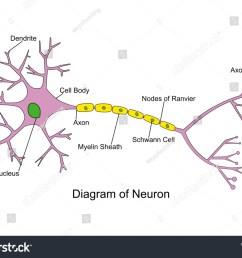 simple neuron diagram 2d labeled nerve cell  [ 1500 x 1161 Pixel ]