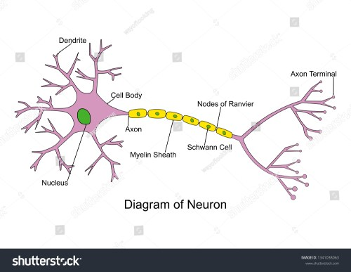 small resolution of simple neuron diagram 2d labeled nerve cell